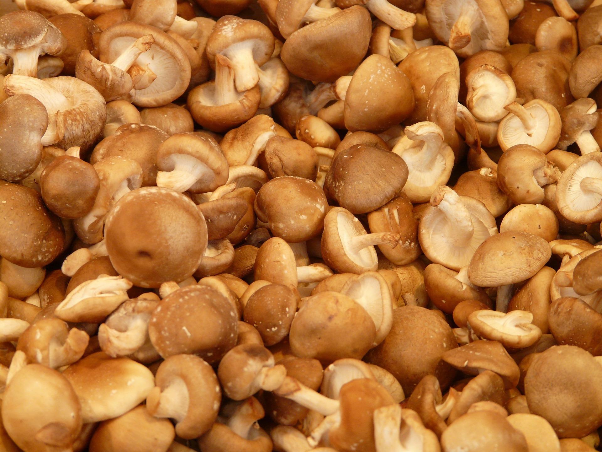 tons of shiitake mushrooms
